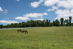 Horses. Two horses on a beautiful day Royalty Free Stock Photography