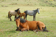 Horses. On a green grass meadow stock photo