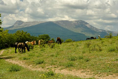 Horses. At rest in Crimea mountains Royalty Free Stock Photography