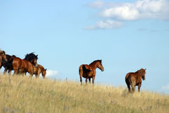 Horses. In pasture with a blue sky Stock Images