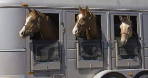 Free Horses Stock Photo - 14650320