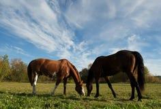 Horses Stock Photos