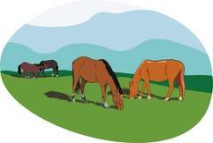 Horses royalty free illustration