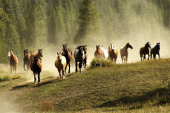 Horses. Herd of horses on Montana Ranch