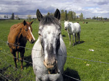 Horses 2 royalty free stock photography