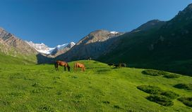 Horses #2. Typical landscape of mountain pastures in Kyrgyzstan and Kazakhstan Stock Photos