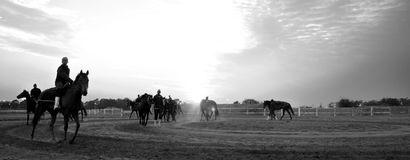 Horses. Warming up the horses royalty free stock photography
