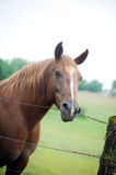 Horses Stock Photography
