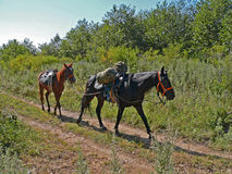 Horses. A pair of the horses steps on a woodsy road. Russian Far East, Primorsky Region Royalty Free Stock Photos