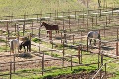 Horses. In their stalls in Ronda, Malaga, Spain Royalty Free Stock Photos
