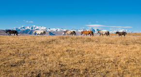 The horses. In the highland pasture in autumn Stock Photo