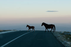 Horses. Mother and son  through the sky...on the road together.  Transalpina Romania Stock Photo