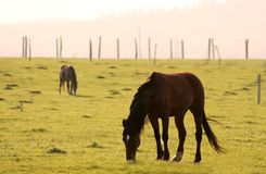 Horses. Two horses away on the field Stock Images