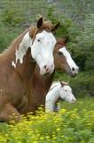 Horses. Three Horses Stock Photos