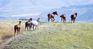 Horses. Graze in a pasture Stock Photo