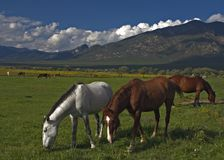 Horses. In Taos Pueblo, New Mexico, USA royalty free stock photography