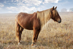 Horses. The weather is nice, horses walking on the grass stock photos