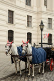 Horses. An image of a couple of horses in Vienna Stock Photo