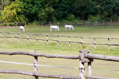 Horses Stock Photos
