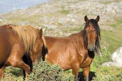 Free Horses Royalty Free Stock Image - 2891726