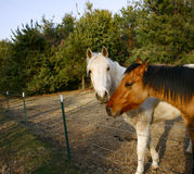 Horses. Photo of two horses in a fenced pasture royalty free stock photos
