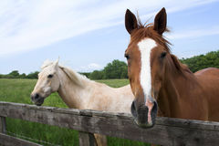 Horses. Enjoying a summers day Stock Photo