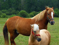 horses στοκ εικόνες
