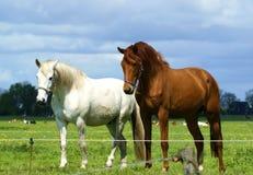 Free Horses Stock Image - 36756171