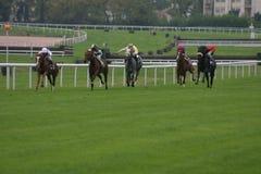 Horses. Horse racing Stock Photos
