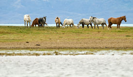 Horses Stock Images