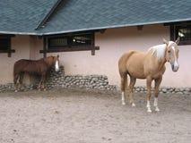 Horses. Zoo, animals, domestic, nature royalty free stock photos