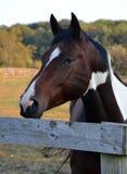 Horses1 Arkivbilder