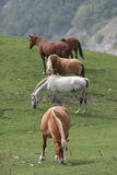 Horses. Of race in the freedom of the mountain Stock Photo