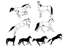 Horses. Silhouettes and contours of Arabian horses in action Royalty Free Stock Image
