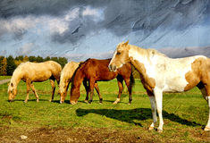Horses. Pictorial scene with horses on pasture -artwork in painting style Royalty Free Stock Photo