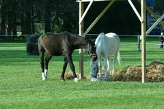 Horses. 2 Horses stock image