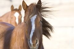 Horses. A horse in a farmers field royalty free stock images