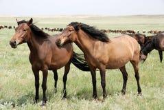 Horses. Herd on a farm Stock Image