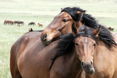Horses. Herd on a farm Royalty Free Stock Image