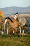Horses. Portrait of a wild horses stock photos