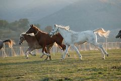 Horses. Portrait of a wild horses Stock Photography