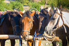 Horses. In a ranch in Crimea Stock Image