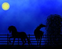 Horses. An illustration of two horses in the night Stock Photo