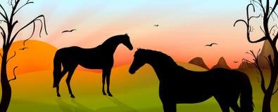 Horses Stock Image