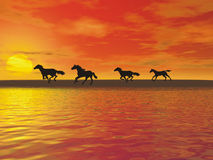 Horses. Wild horses gallop Stock Image