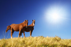 Horses. Two beautiful horses grazing in a field Stock Photos