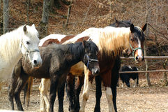 Horses. In ranch Stock Images