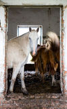 The horses in an abandoned house Stock Photo