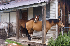 Horses by Abandoned House Royalty Free Stock Photos