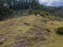 Horses aerial photo In a forest royalty free stock photo
